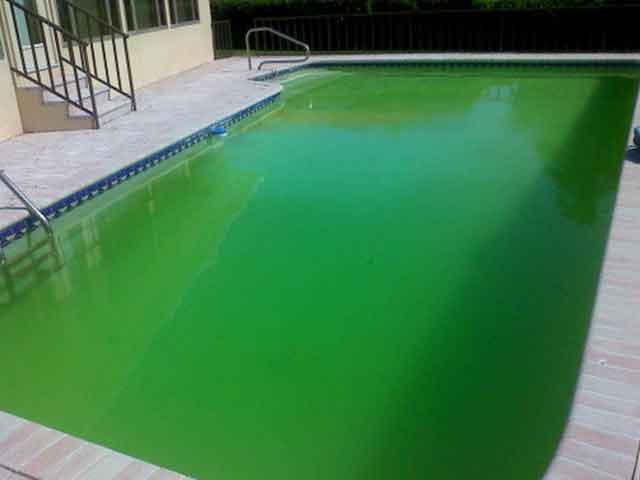 Green-pool-pic